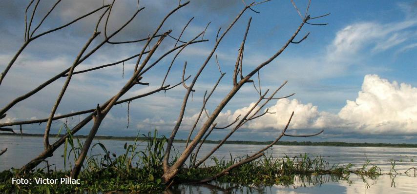 Actitudes y opiniones de colombianos frente el medio ambiente